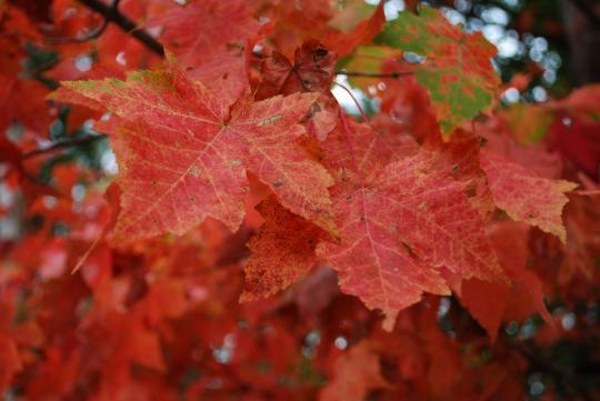Leaf_Best