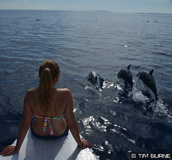 Dolphins in Sulawesi