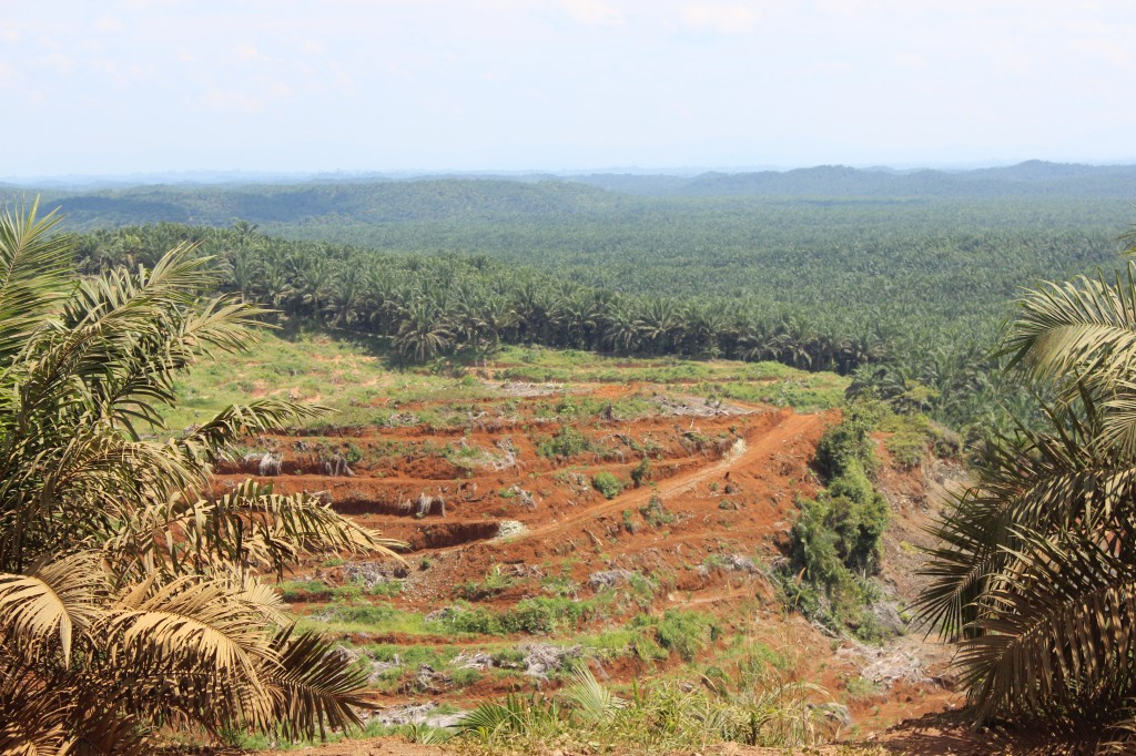 Malaysia is the world's largest exporter of palm oil. We witnessed first hand the effect this has on the environment; loss of biodiversity, flash floods, relocating indigenous tribes and landslides is just the start.