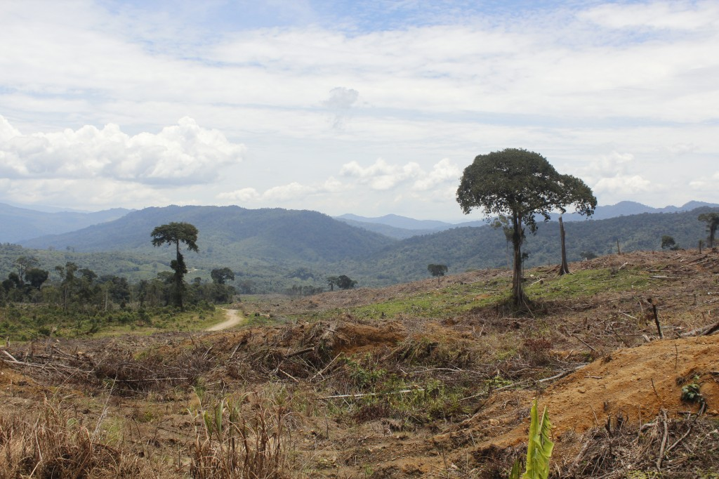 A common view in Malaysia. Virgin jungle is logged and replaced by ether palm oil and rubber plantations or Acacia tress used to make white paper.