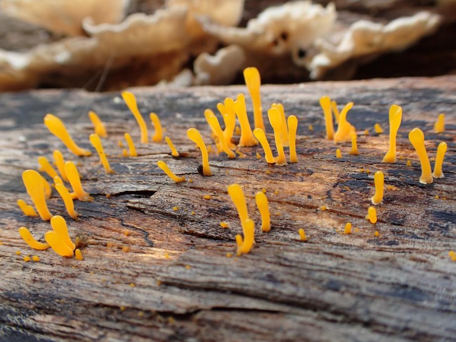 Fungi or little aliens?